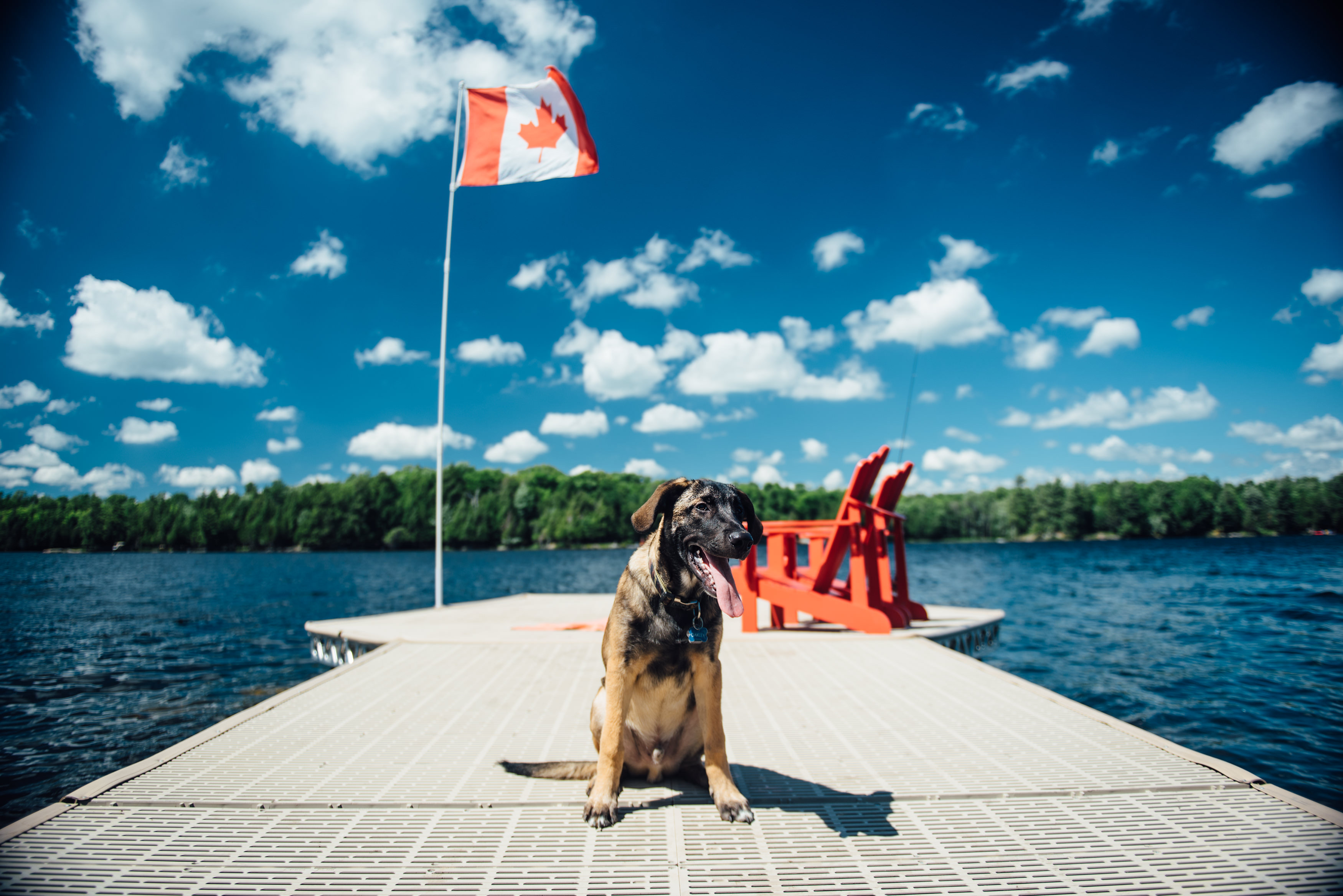 Dog Siting on ThruFlow dock with muskoka chairs and Canadian Flag