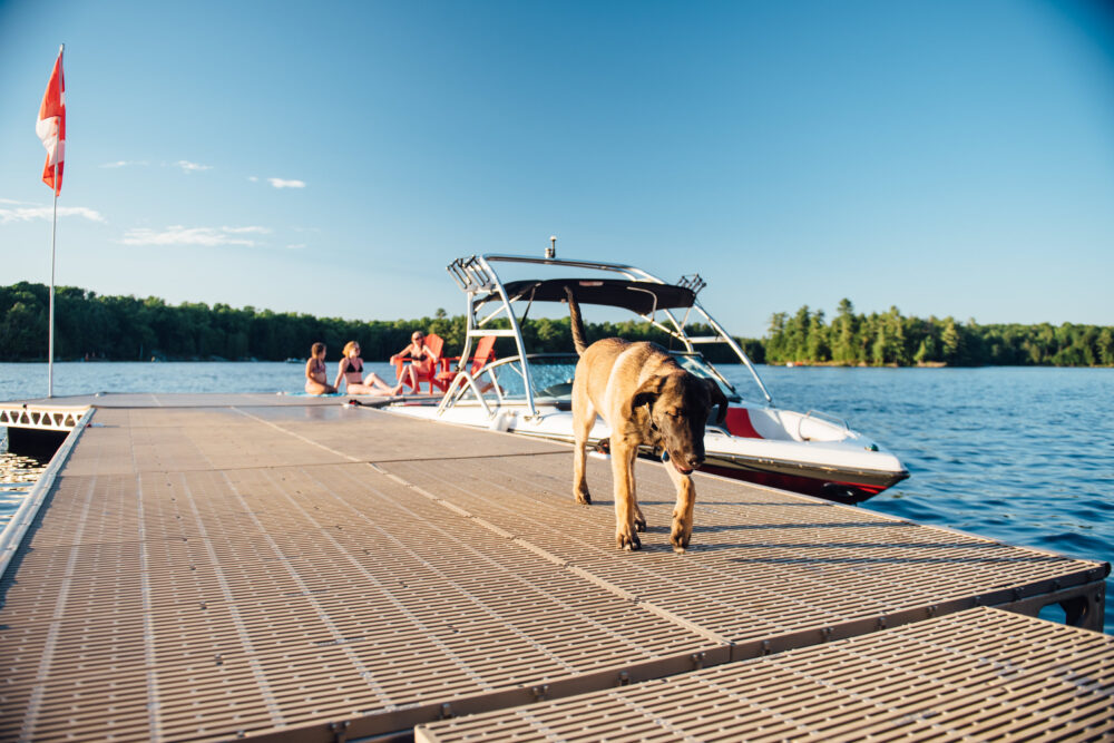dog on floating dock