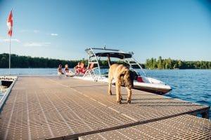 dog on floating dock