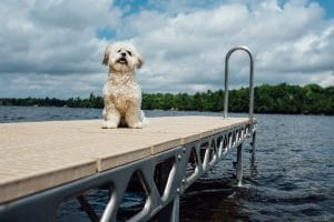 Dog on 4x8 standing dock section
